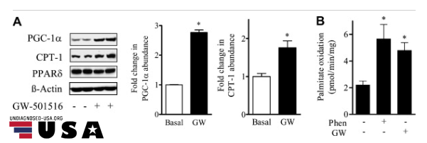 cardarine (gw-501516) study on fat oxidation